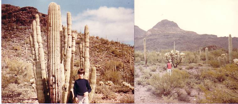 lower Sonoran Desert